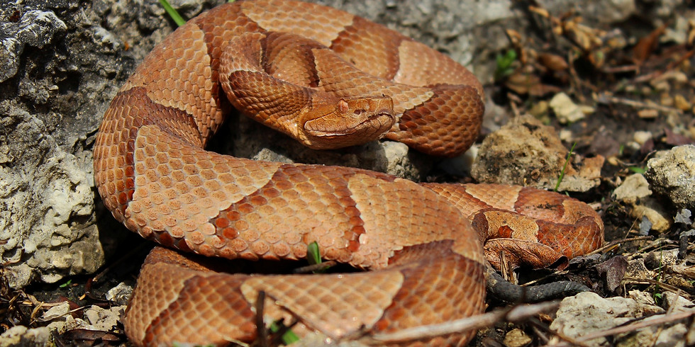 Snakes -- How to Avoid Unwanted Encounters