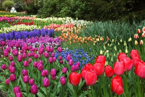 3 EASY STEPS TO PLANTING FALL BULBS