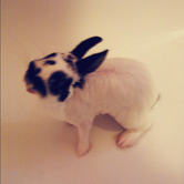Wet rabbit