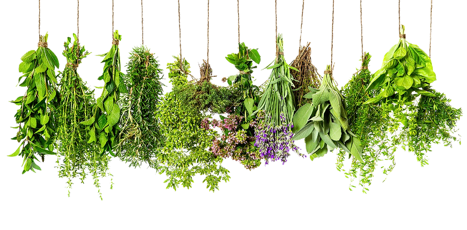 Herbs-PNG-HD.png
