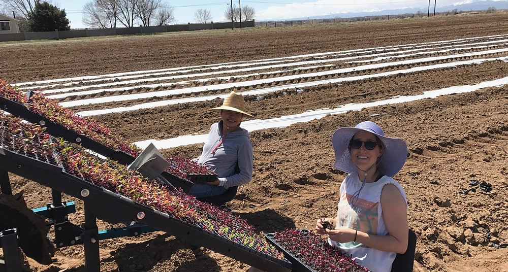 Hoffman Farms planting