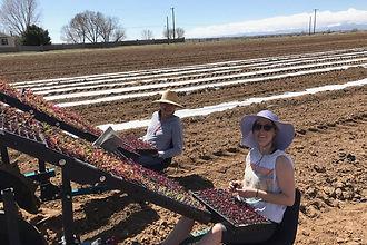 Seeding on the Farm