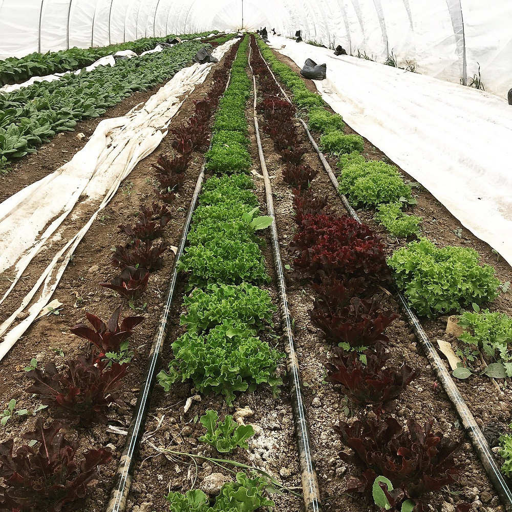 Kilt Farm - Healthy Soil