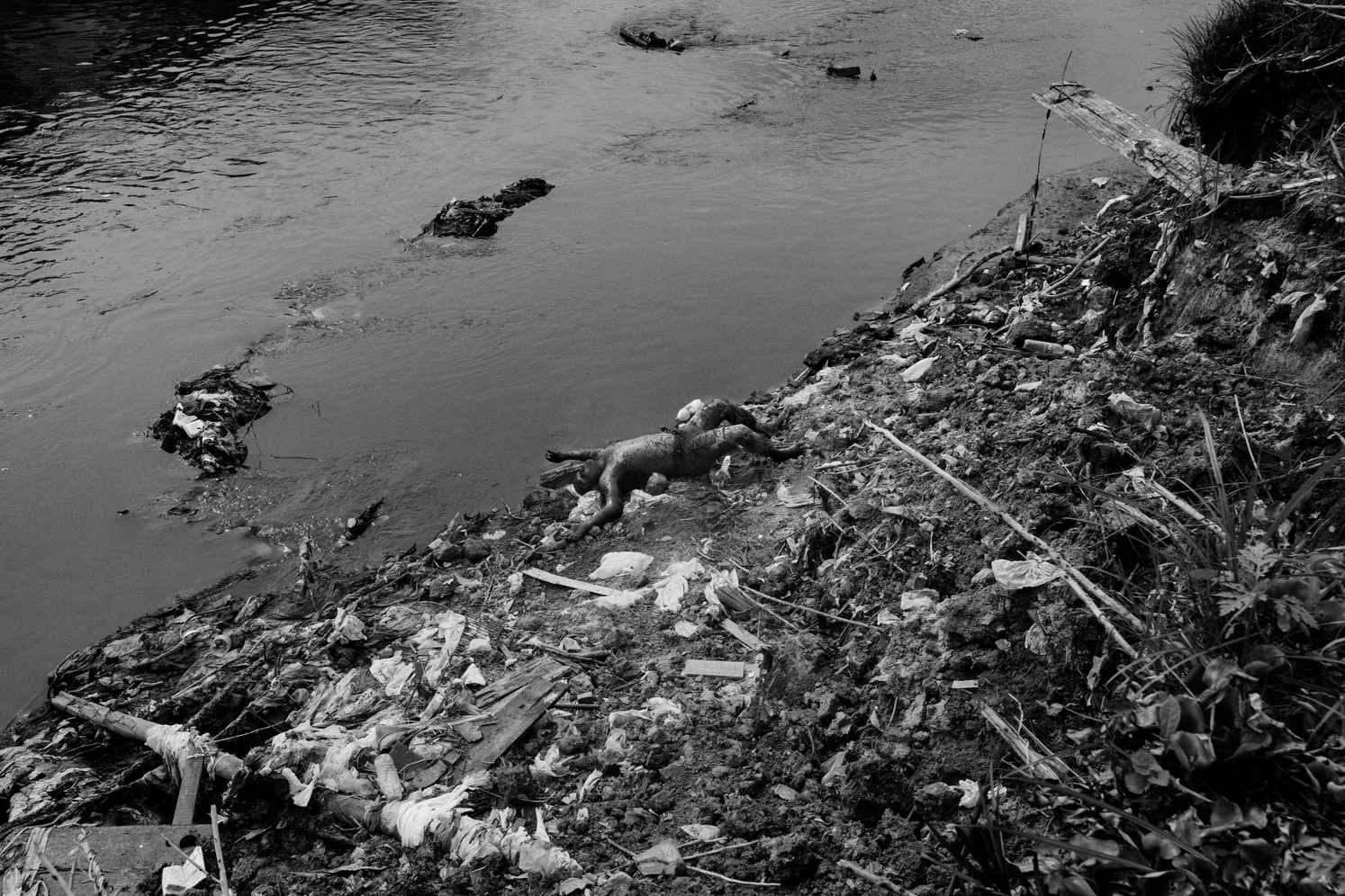 A dead body found along the banks of the river São Raimundo in Manaus. Several bullet's holes were discovered on the body. Police officers claimed that the man was killed. The Brazilian Amazonian capital Manaus is currently experiencing massive homicide rates, five times higher than Sao Paulo's and up 168% in ten years, with local drug gang Familia Do Norte fighting a bloody turf war with the encroaching Primeiro Comando da Capital from Sao Paulo. Manaus is Brazil's closest big city to nearby drug production territories in Colombia and Peru which makes it a major transit point for Brazil (world's second largest cocaine consumer) and Europe, while in recent years, the city has also become a major consumption destination as the gangs flood the streets with Oxi, a cheap and destructive crack cocaine derivative.