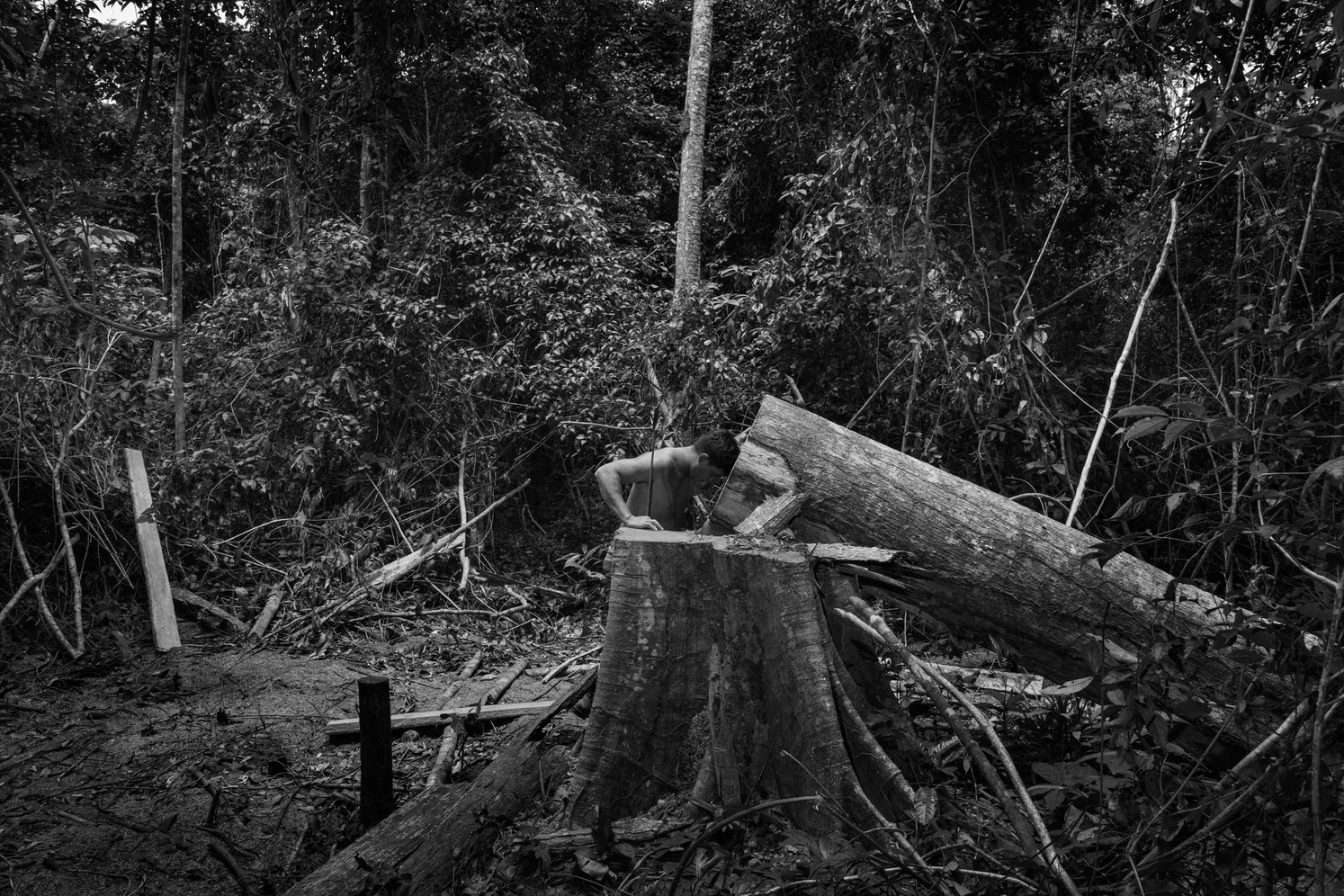 A member of the Guajajara forest guard in a moment of of sad silence at the sight of a toppled tree cut down by suspected illegal loggers on the Araribóia indigenous reserve in Maranhão state. With deep cuts to Brazil's environmental and indigenous protection bodies in recent years, tribespeople across the Amazon are increasingly forming vigilante groups to protect their lands against unscrupulous farmers, loggers and land grabbers. But it's dangerous work. Indigenous activists who stand up to powerful interests in Brazil's Amazon states are routinely threatened, persecuted and murdered.