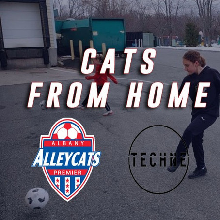 Cats From Home