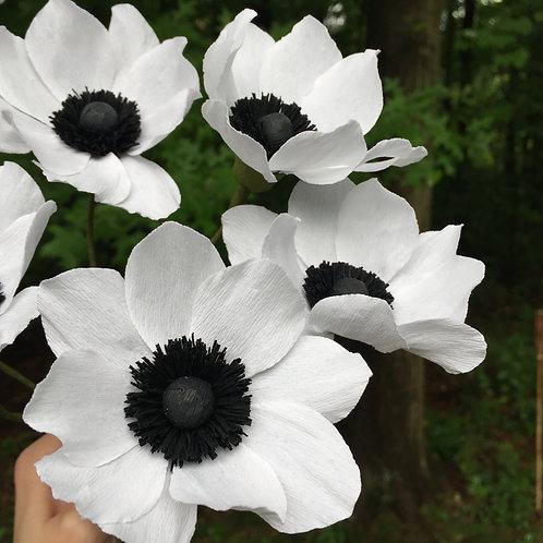 6 Classic anemone