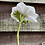 Thumbnail: Crepe paper anemones