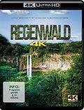 regenwald 4k.jpg
