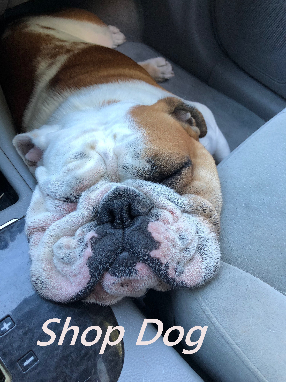 Shop Dog_edited.jpg