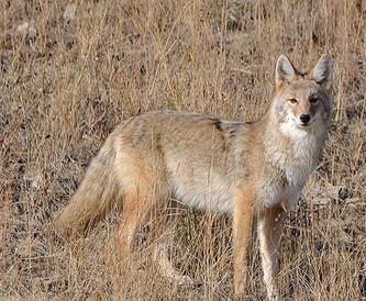 Avoiding Cabin Fever: Post-Deer Season Options