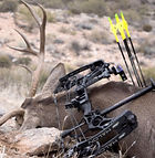 mathews bow