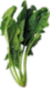 spinach_PNG50.png