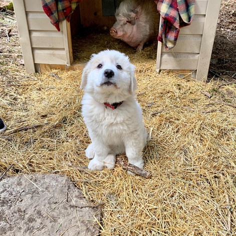 Dolly | Rescued: 2020