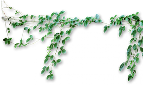 cropped-green-vines-png-8.png