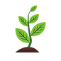 growth-vector-small-plant-3.png
