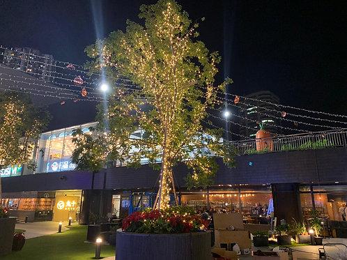 樹木掛燈服務 免費報價