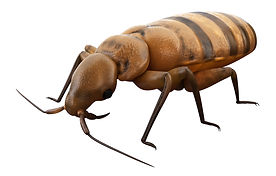 Bed Bug BHI shutterstock_319478237.jpg