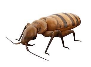 Bed Bug v2 BHI shutterstock_319478237.pn