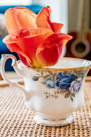 flower in a tea cup.jpg