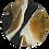 Thumbnail: TORTOISESHELL CARAMEL PLATE