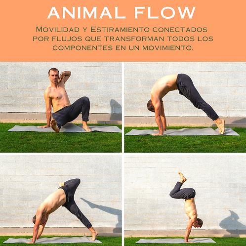 Animal Flow Online Mensual