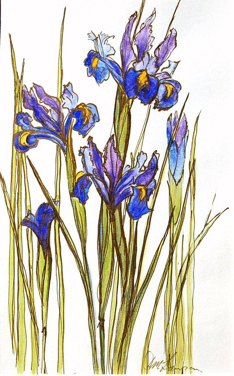 Iris (17cmx27cm)