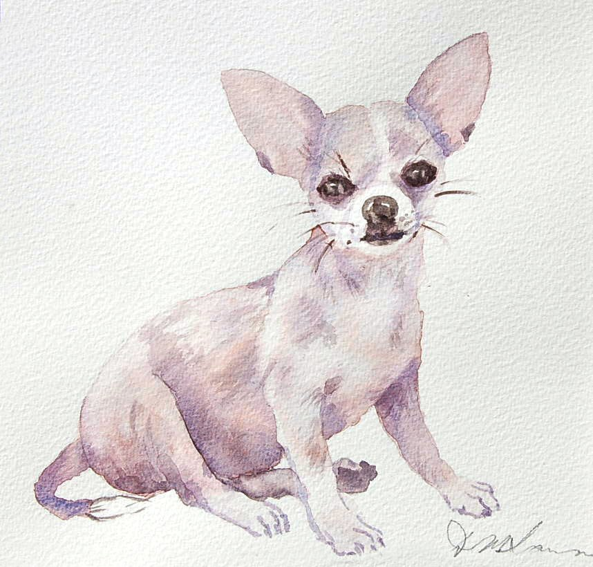 Chihuahua - Watercolour (20cmx19cm)