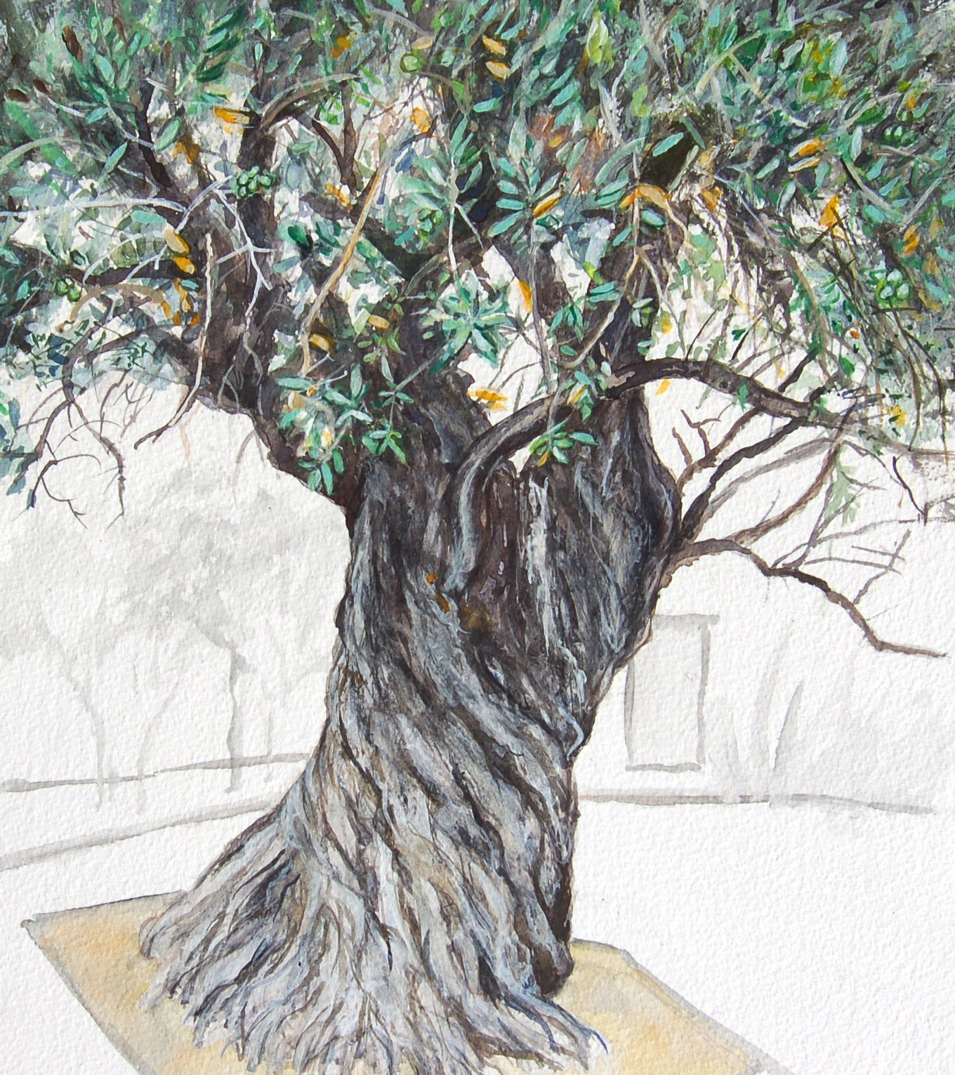 Olive Tree (in Cyprus for Adi) (32cmx36cm)