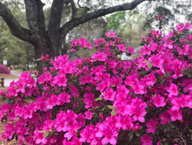 Spring Spruce Up 2019