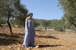 Olive trees owned by local farmers