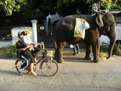 My Man in Thailand