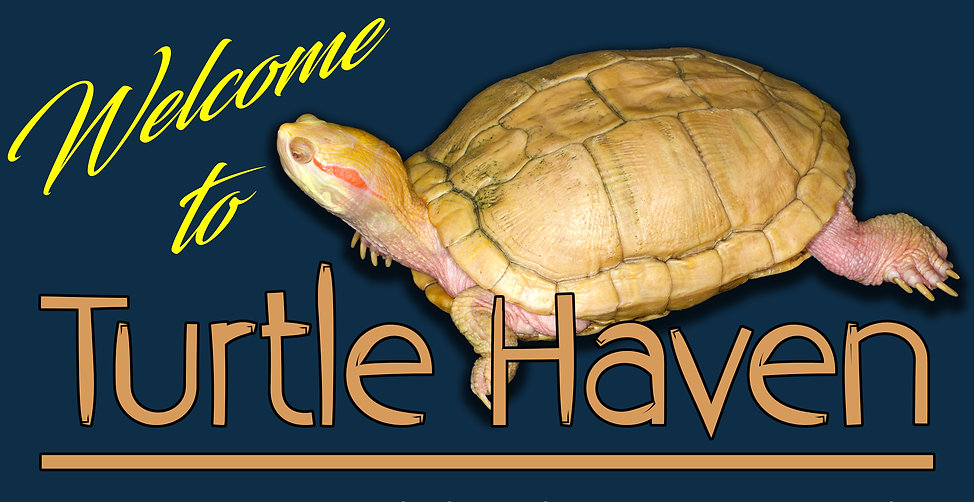 Turtle Haven Header.jpg