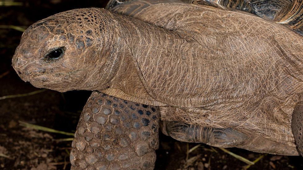 Tortoise Sponsorship 4