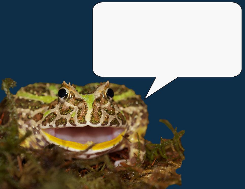 Frog Talk.jpg