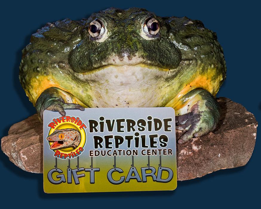 Bullfrog & Gift Card.jpg