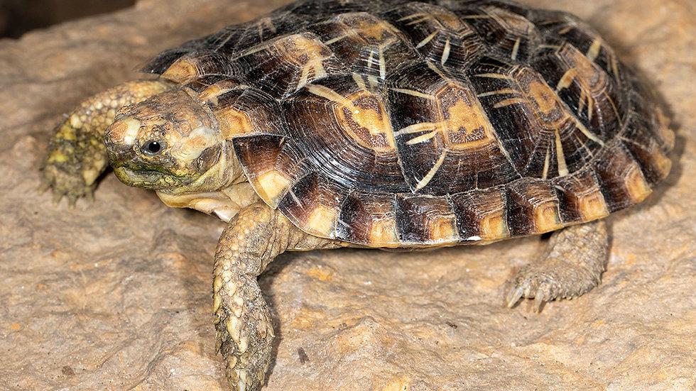 Tortoise Sponsorship 1