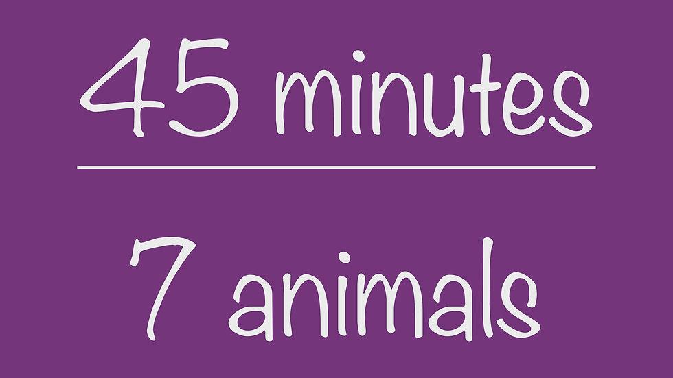 Elementary 45-minute Virtual Program