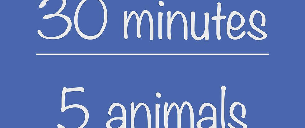 PreK 30-minute Virtual Program