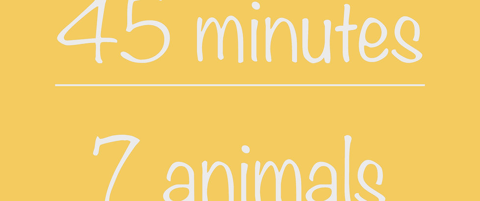 Middle School 45-minute Virtual Program