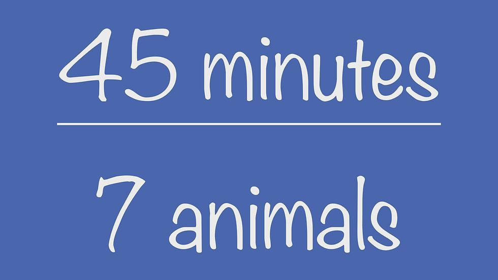 PreK 45-minute Virtual Program