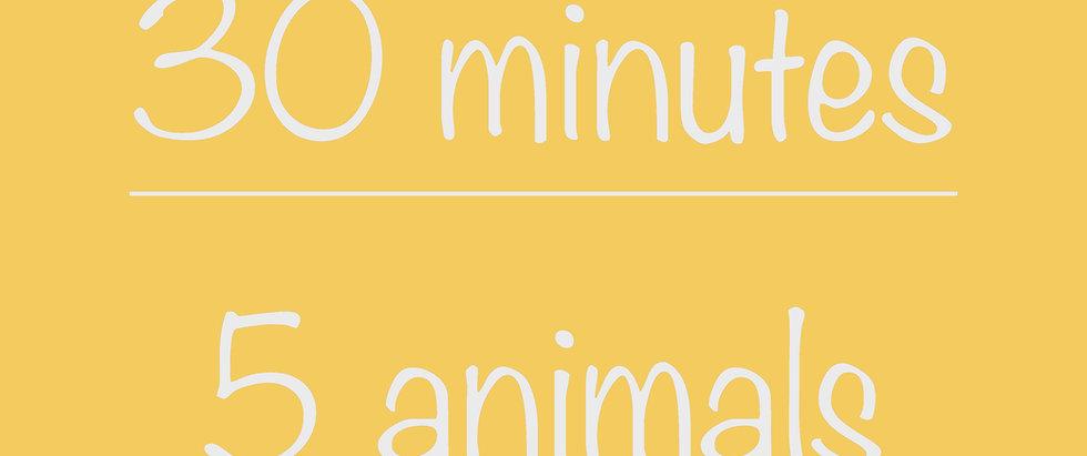 Middle School 30-minute Virtual Program