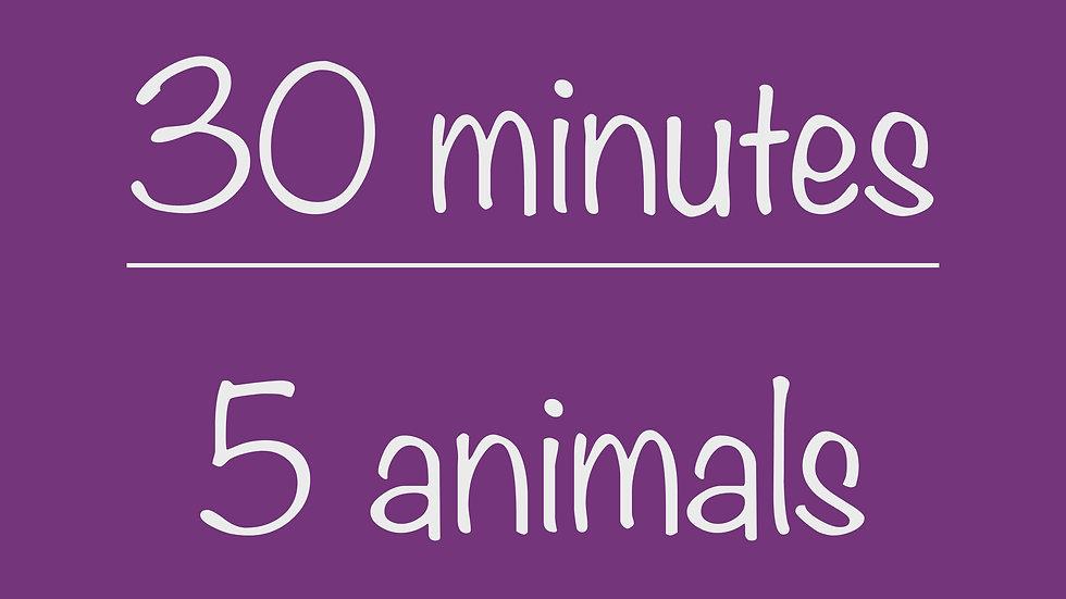 Elementary 30-minute Virtual Program