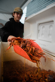 crawfish getting scooped out of cooler durring new orleans wedding