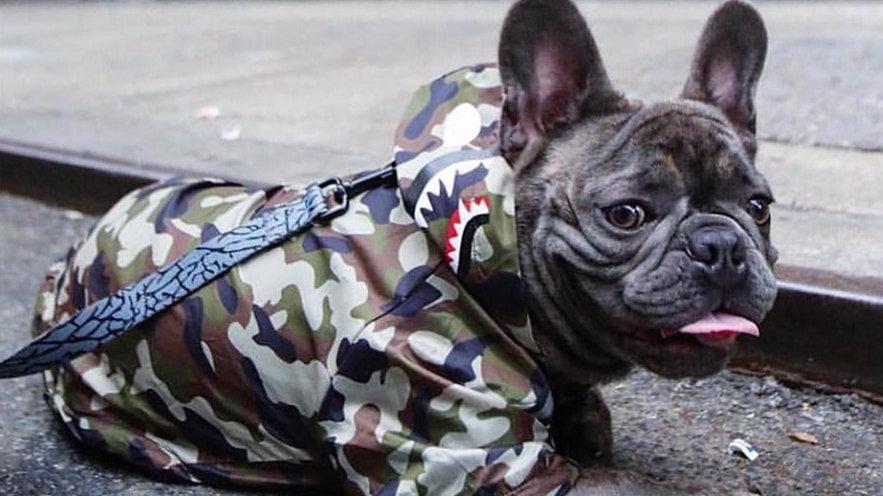A Barking Pup Camouflage Windbreaker