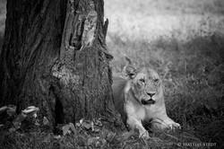 Serengeti-3