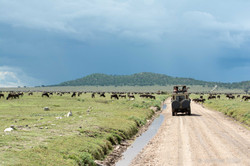 Serengeti-2