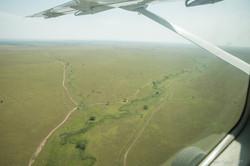 Serengeti pains