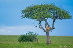 Serengeti-4