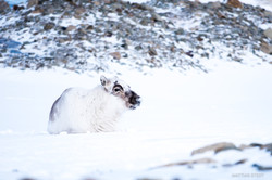 Svalbard-19